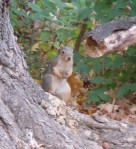 This red squirrel appears to be an experienced photo subject.
