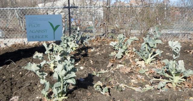 The Cornell University Alumni planted these last fall.