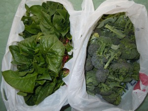 Broccoli and spinach ready for delivery to AFAC from 10th &Barton.