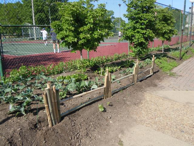 Multiple sections of the growing fence...