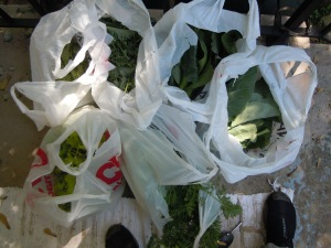 Some of the yield, including, lettuce, kale, collards, and bok choi.