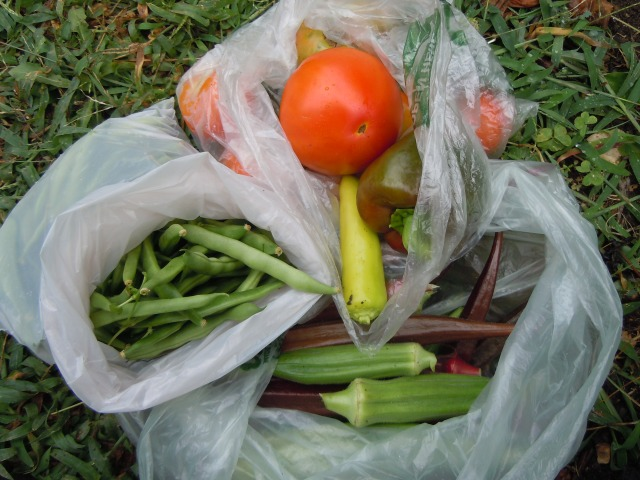 Sunday afternoon's rain break harvest...