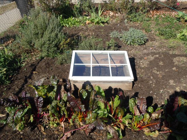 I just love seeing the cold frame in the garden!  And how about that chard?