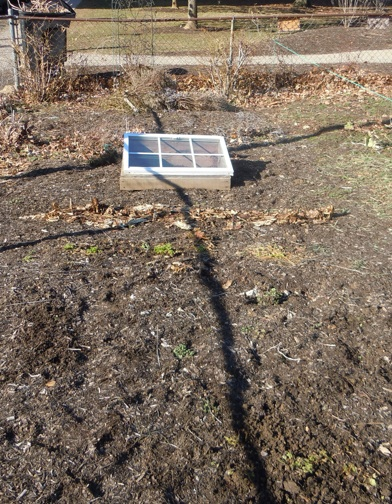 Not much here but mulch. That brown line in front of the cold frame was my chard.