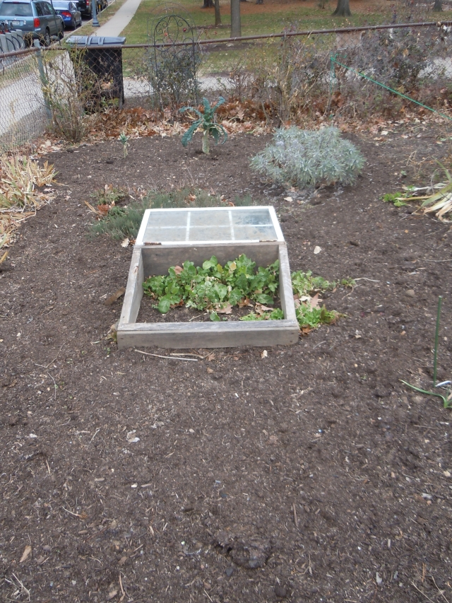 It hasn't yet been cold enough for the cold frame...