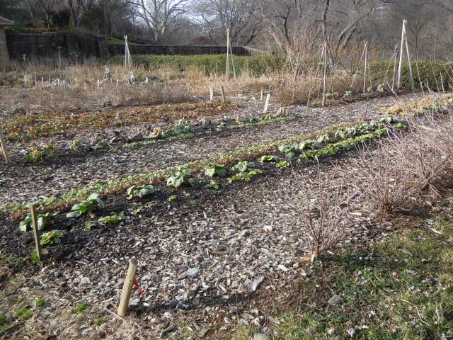 Bok choi and assorted other cold hardy plants were visible.