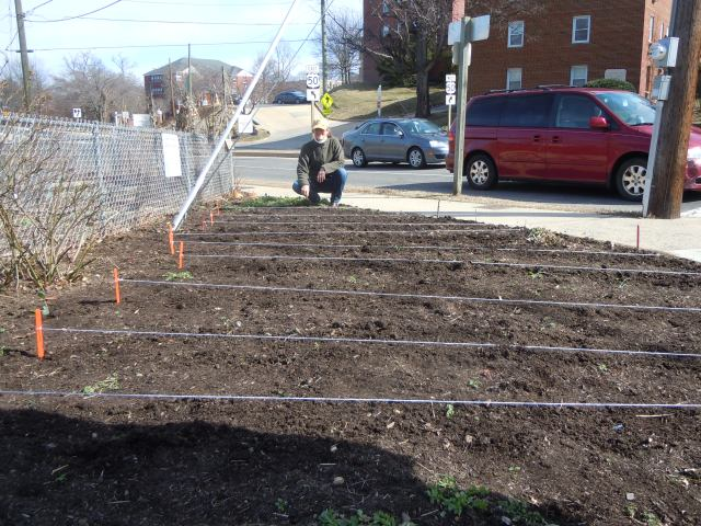 When you have the right help, you can plant a very organized garden in a short time.  Jane's string almost made me feel like Mr. McGregor.
