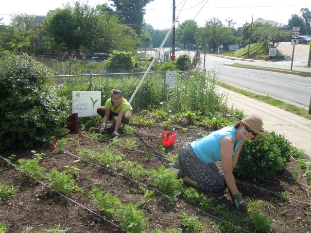 Champion weeders and gardeners, Sarah (l) and Jane (r).