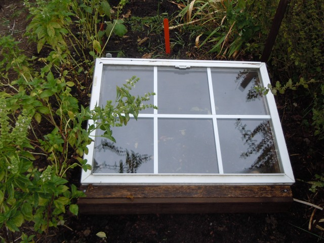 I just love the cold frame. It's like a superhero of the garden.