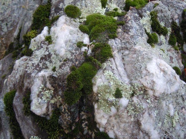 Quartz, moss, lichen...