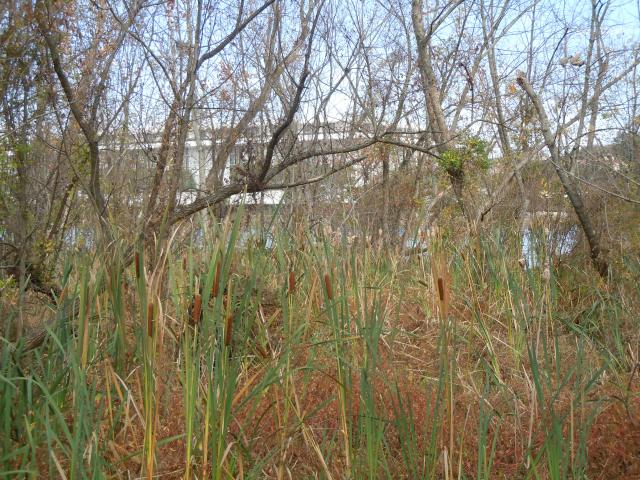 That's the Kennedy Center through the undergrowth and across the water.
